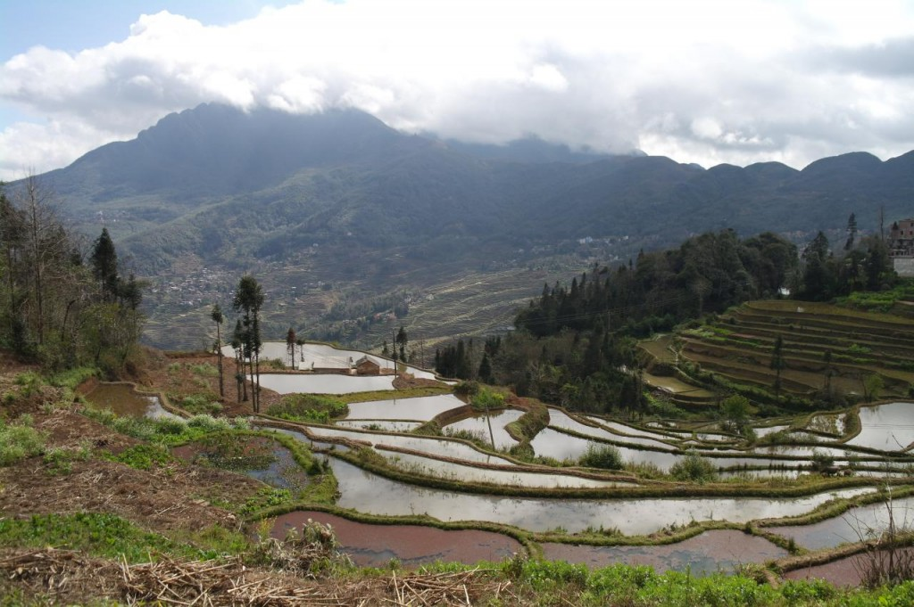 Rýžové terasy Yuanyang