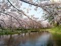 Sakury v Hirosaki